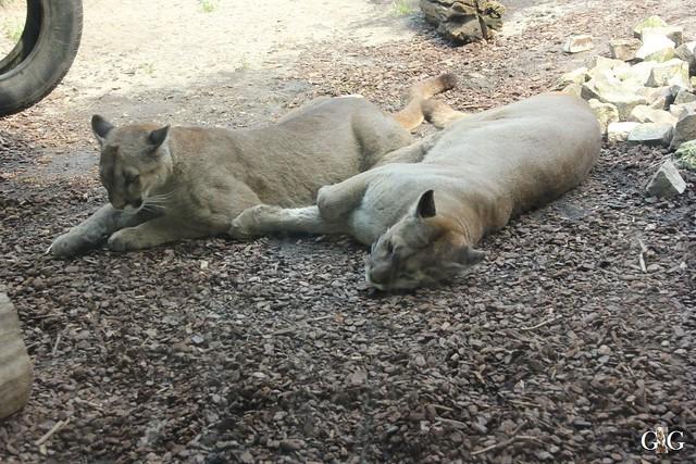 Besuch Zoo am Meer 26.06.201688