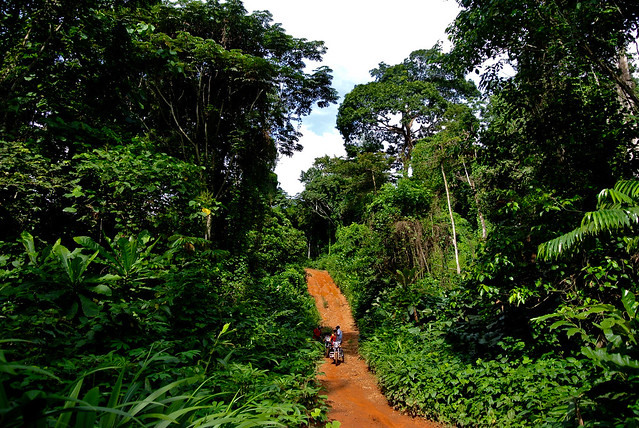 Forest road in Nigeria