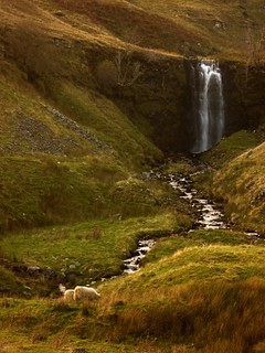 Sheep and Waterfall | by adam1UK