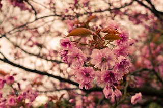 HBW ~ Gorgeous Spring | by w.mekwi photography [here & there]