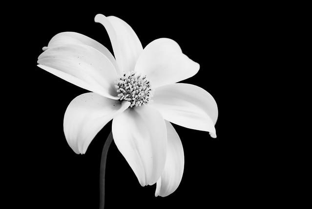 2016 05 29 Flower