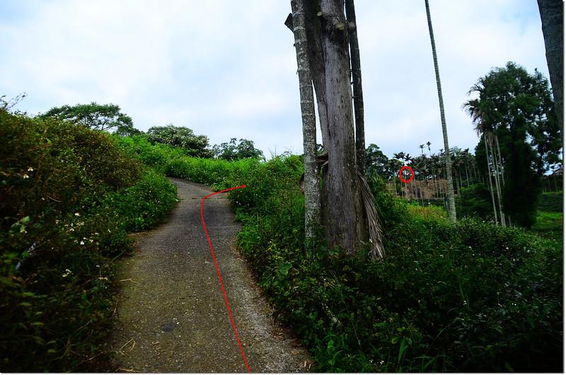 南坪山登山步道 2