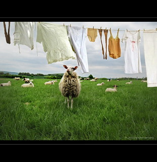 Laundry in Spring | by h.koppdelaney