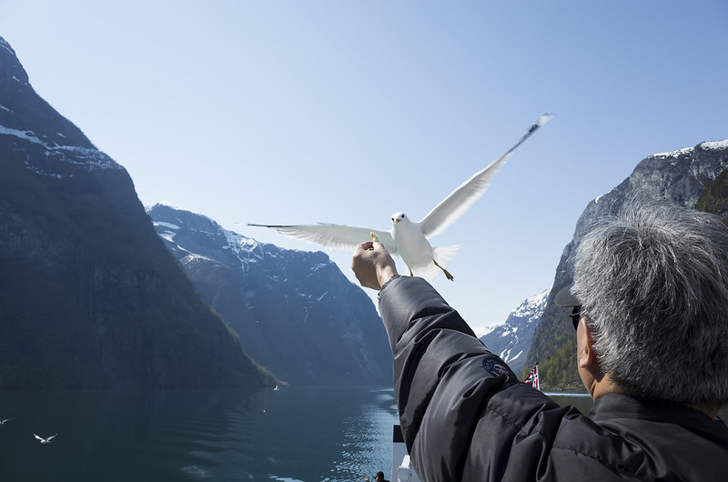 Seagull of the Fjord