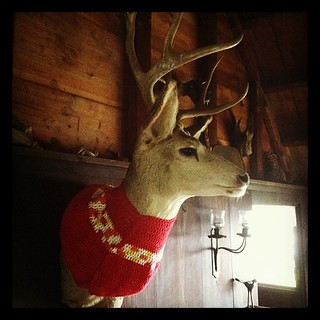 @cindi yarn-bombed the deer! | by jblyberg