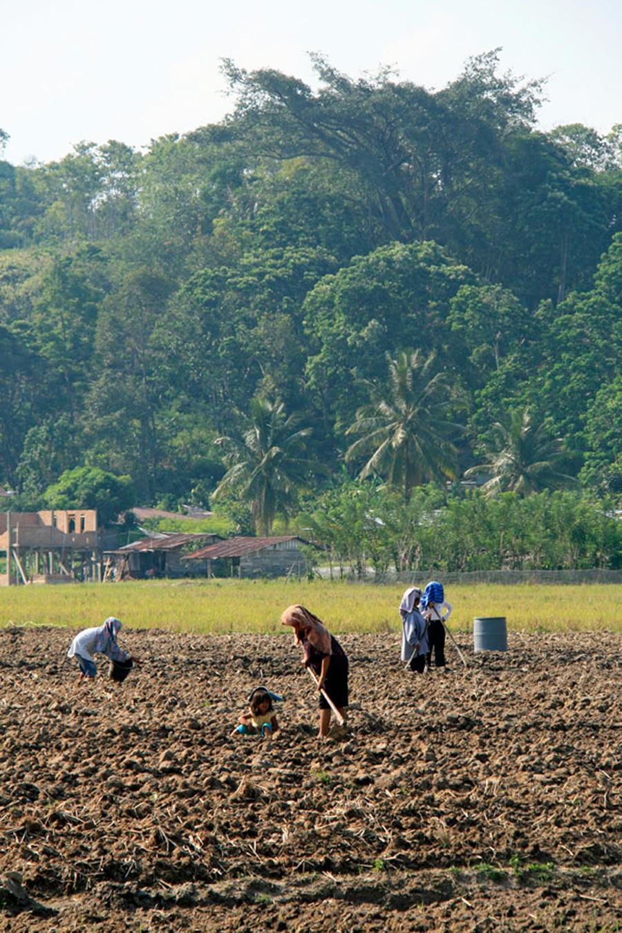 Lake Toba maanviljelijät