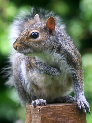 Young Squirrel. | by wurzel.pete.2.5 Million views,Thanks.