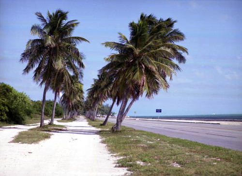 "The ""Bridle Path"" on South Roosevelt Blvd.: Key West, Florida 