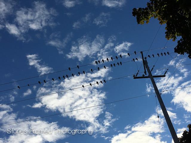 282. | birds on lines.