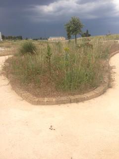 Turi aree verdi M5S (2)