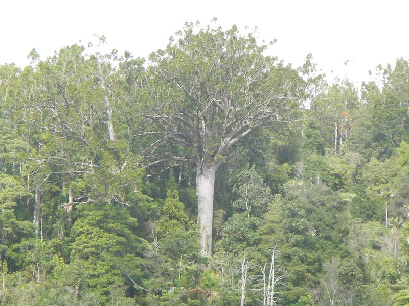 2016 - Cascade Kauri Park Auckland