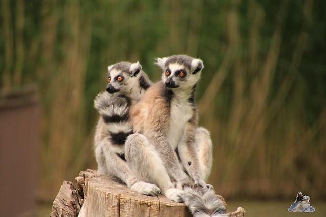 Tierpark Berlin 28.05.2016  0199