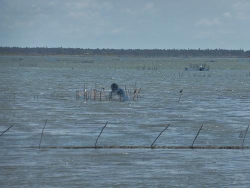 Jaffna Lagoon