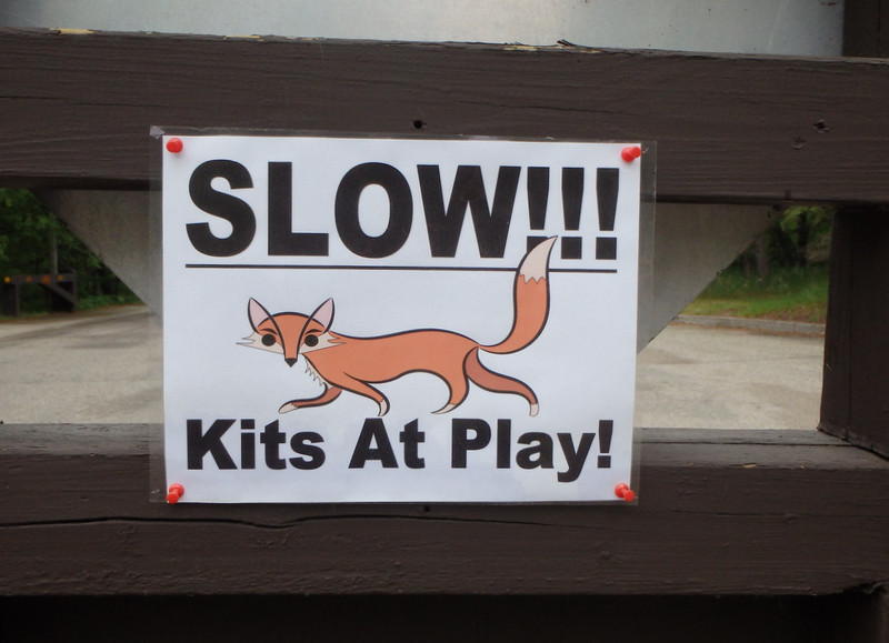 Slow!!! Kits at play! and a drawing of a fox