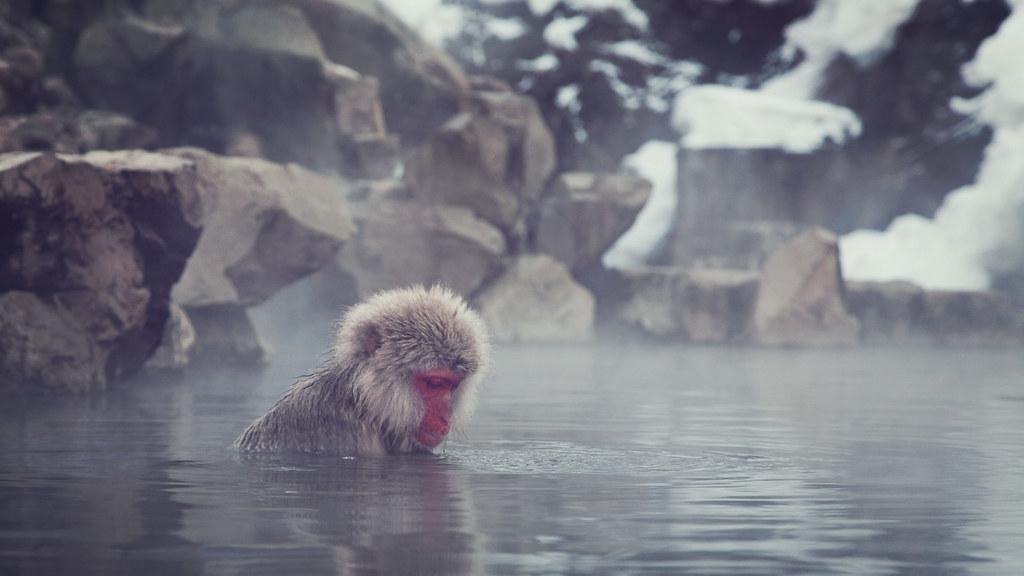 Snow Monkey 01