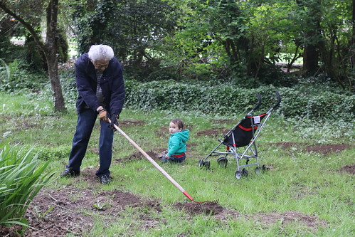 Helping Grandpa flatten molehills