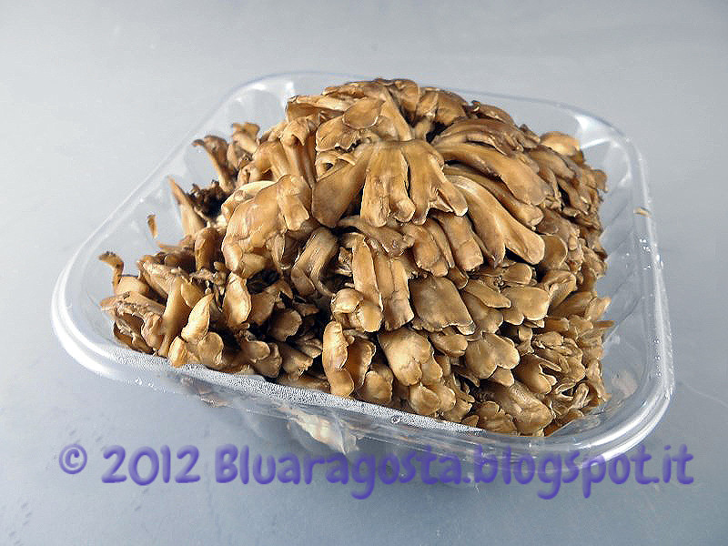 01-funghi maitake