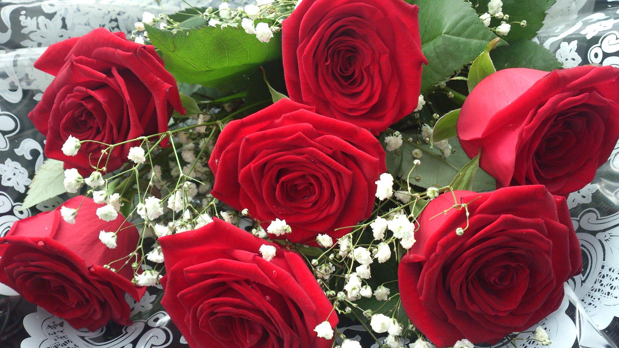 Кота купить розы на огород и цвет подарок жене от мужа на свадьбу