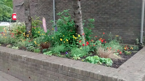 Whickham Library Garden June 16 (2)