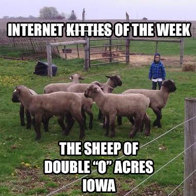 IKOTW sheep of double o