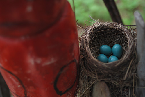 Robin's Nest, Next to Floats | by trini_naenae