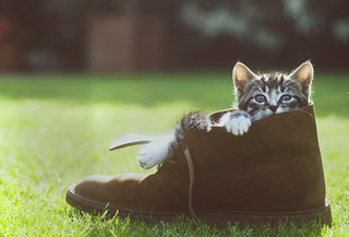 Me, my Clarks and the little cat | by David vDartel