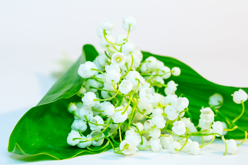 Lily of the Valley | by Raoul Pop