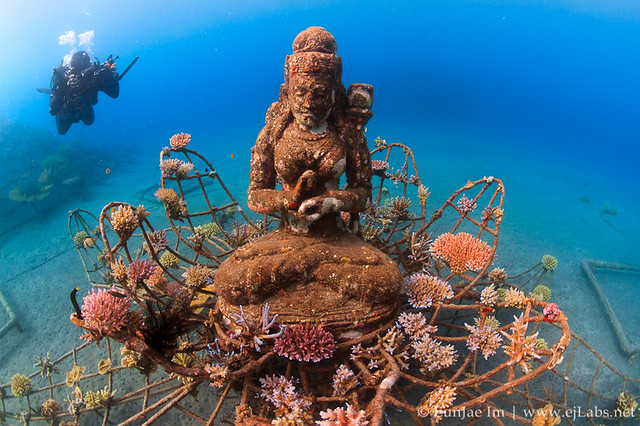 The Coral Goddess