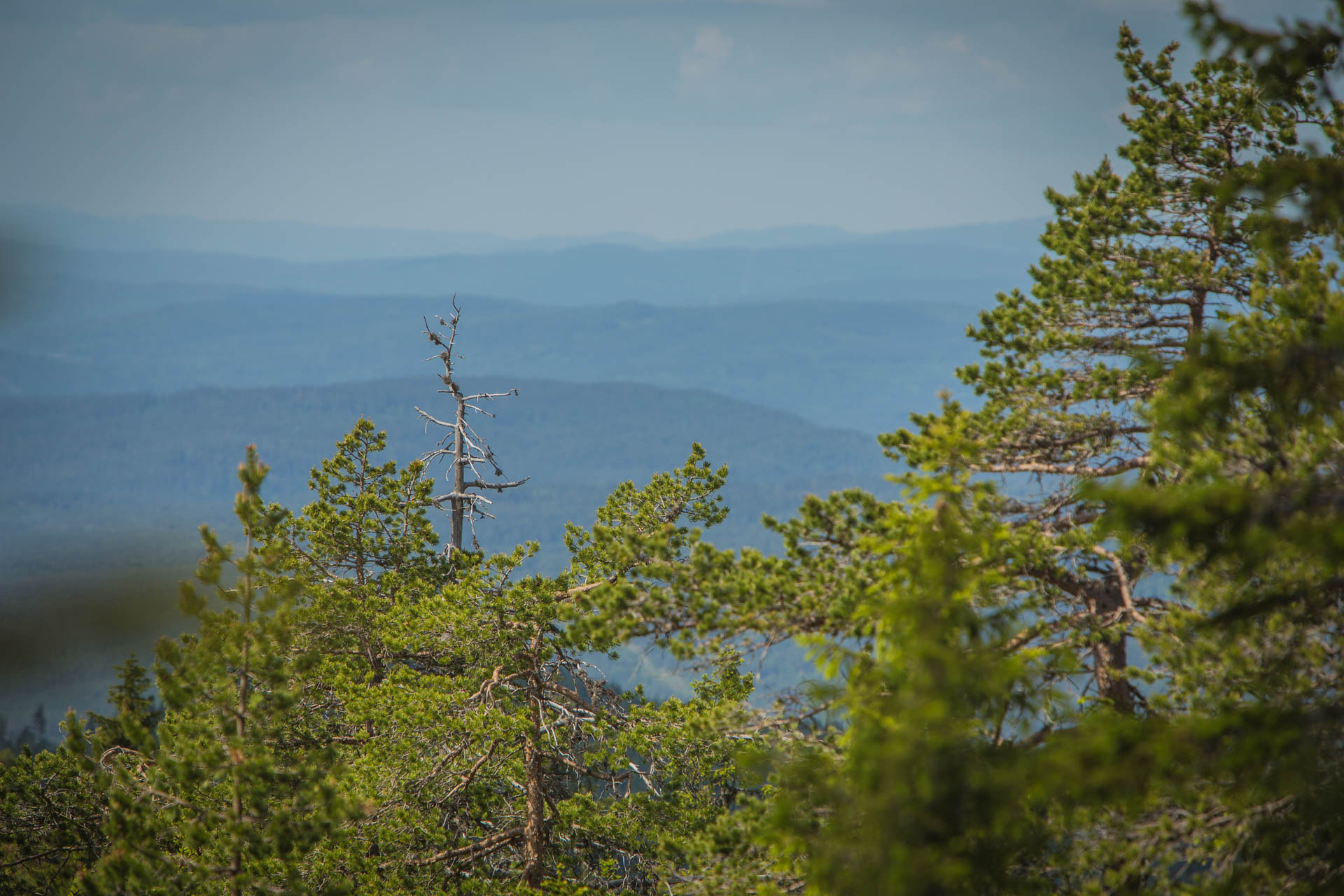 Langvassbrenna naturreservat