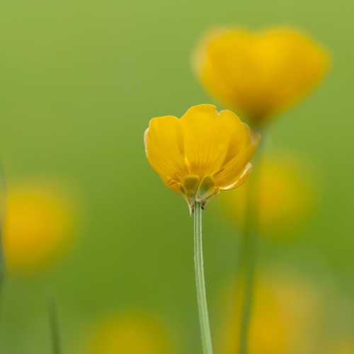 Wild yellow | by Steve-h