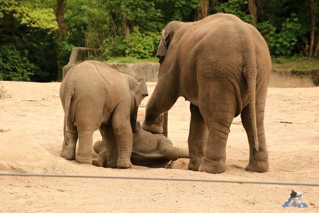 Tierpark Hagenbeck 21.05.2016  0169