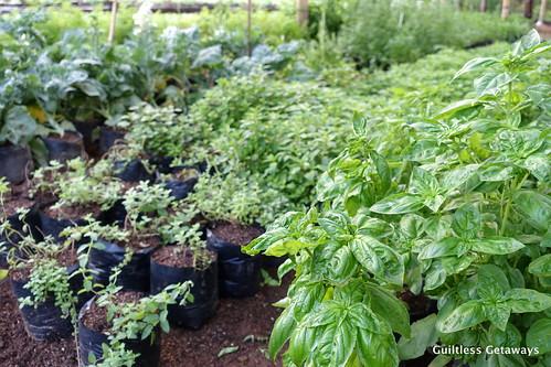 organic-farm-mindanao.jpg