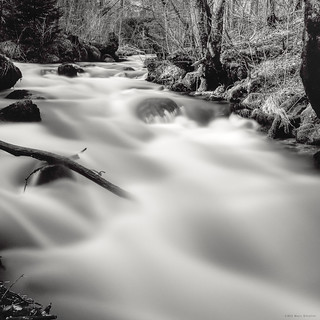 In the Woods of the Smooth Water River IV | by M a r c O t t o l i n i