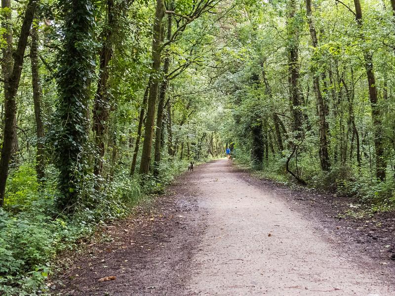 Heading home along the Castleman Trailway