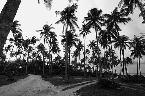 Palm trees black and white photo
