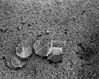 O'Neil Lake, Leaves in the Sand | by mat4226