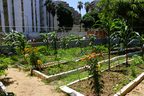 Growing food in city spaces | by Global Justice Now