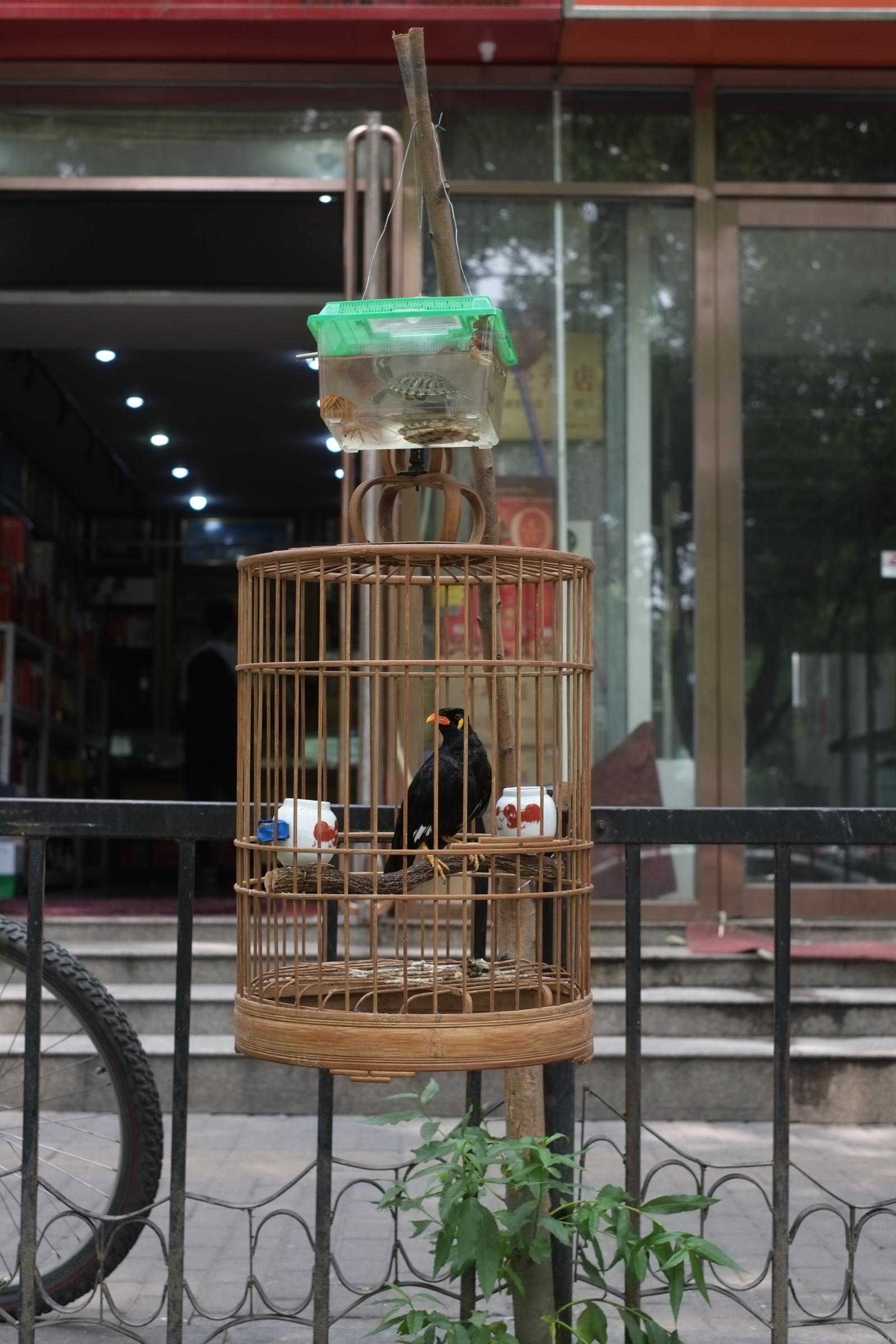 Aqaurium über Vogelkäfig