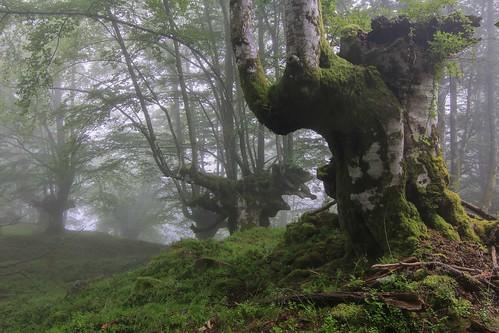 Parque Natural de #Gorbeia #Orozko #DePaseoConLarri #Flickr - -611