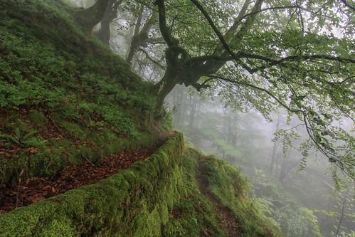 Parque Natural de #Gorbeia #Orozko #DePaseoConLarri #Flickr - -618