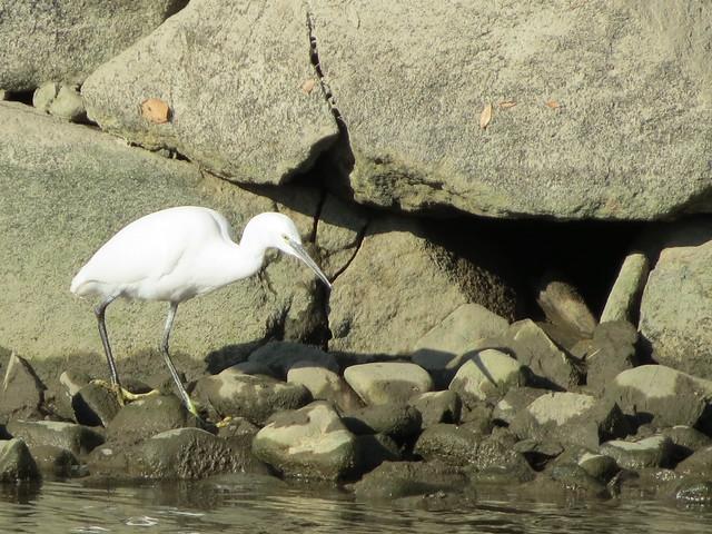 White heron at Himeji Castle