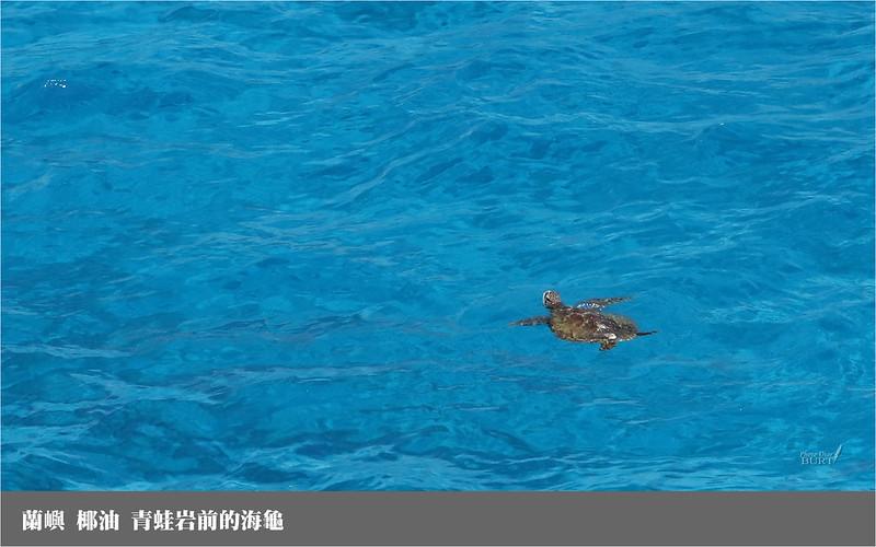 蘭嶼_青蛙岩前的海龜