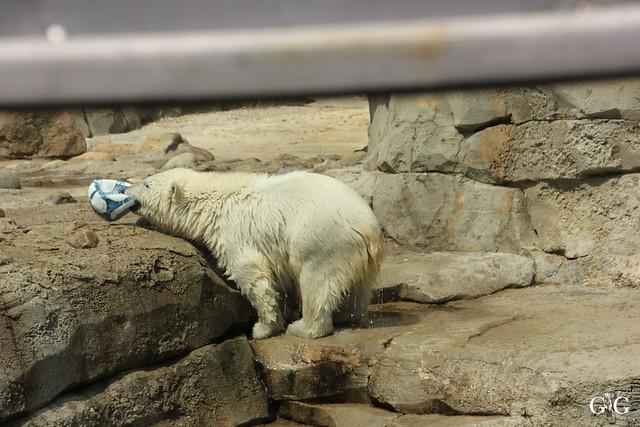 Besuch Zoo am Meer 26.06.201652