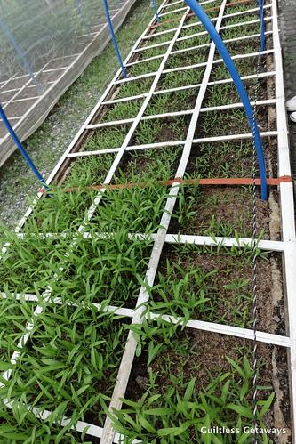 square-foot-gardening.jpg