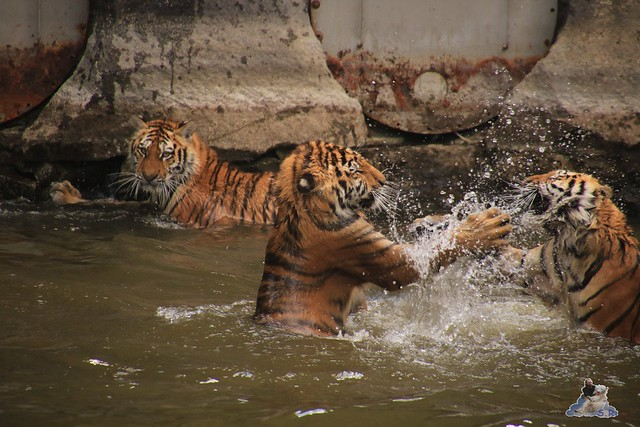 Tierpark Berlin 29.05.2016   0184
