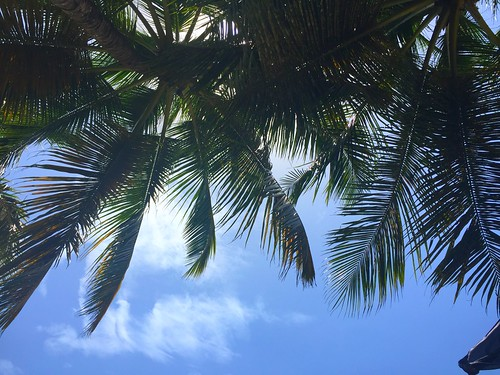 Palms | Cabarete Beach