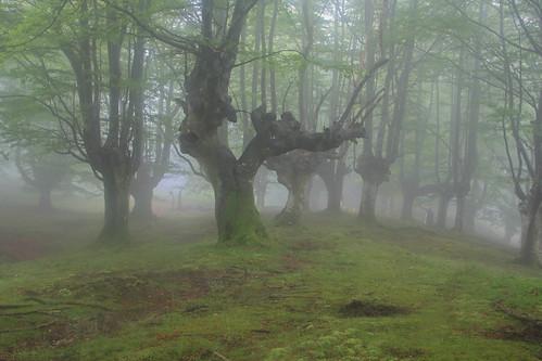 Parque Natural de #Gorbeia #Orozko #DePaseoConLarri #Flickr - -496
