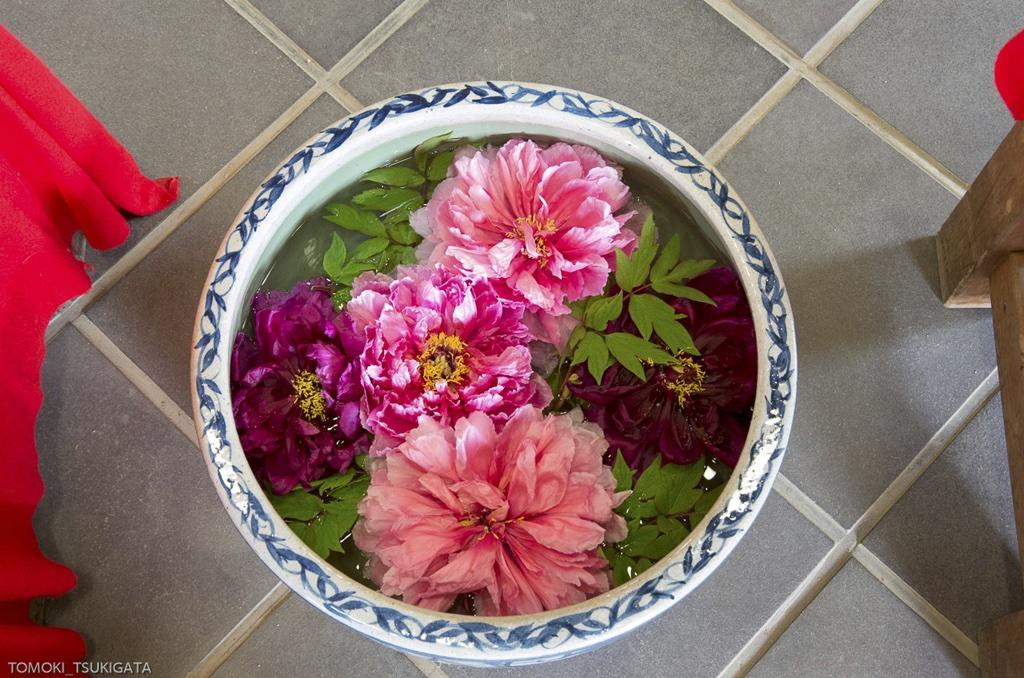 しり撮り写真 006 「浮かべた花」(でやっしぃ〜さん)