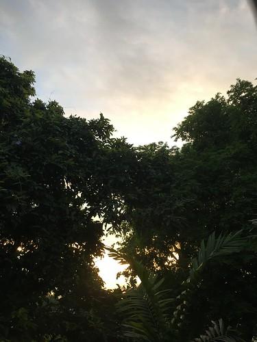 early morning sun peeking thru the trees