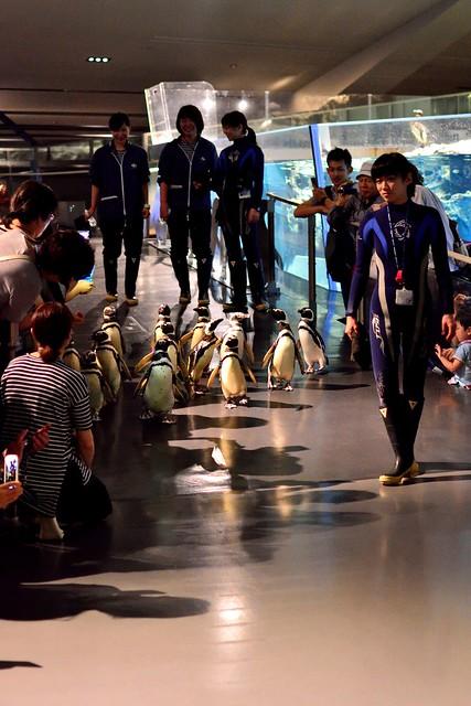 すみだ水族館_てくてくペンギンピクニック